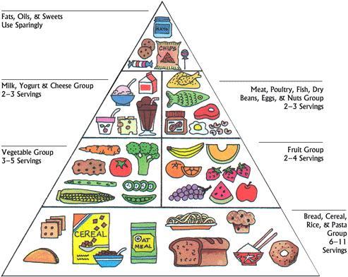 food_pyramid (1)